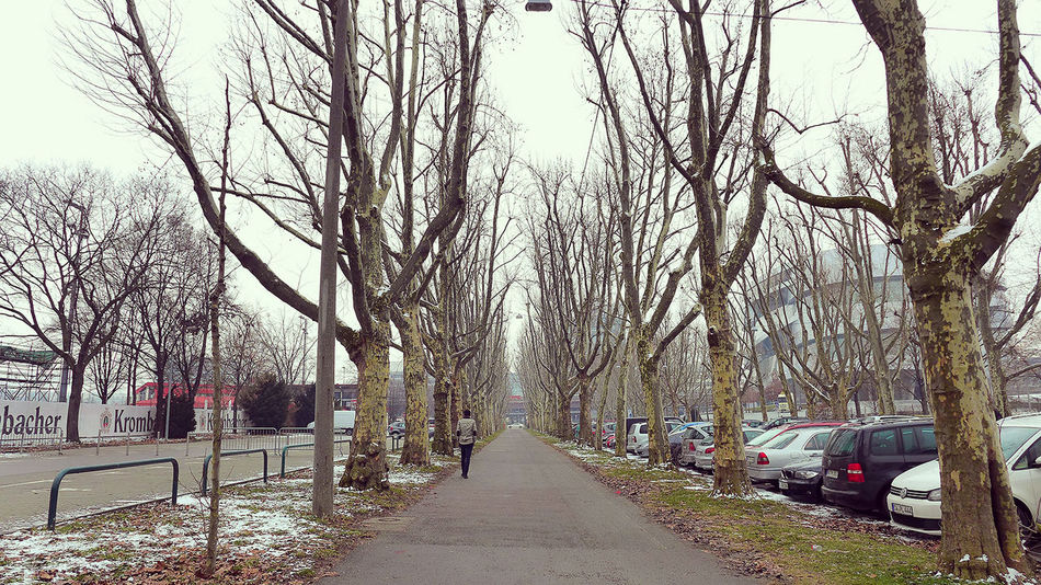 Tree The Way Forward Bare Tree Outdoors Day Road No People Germany My Travel Walking Germany Photos Germany Photos Official EyeEm © Travel Photography Travel EyeEm Gallery Outdoor Photography Nostalgia Nostalgicmoments Nostalgic Landscape in Germany🇩🇪