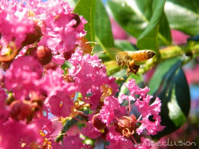 busy busy! Flowerporn Streamzoofamily Thebeautyofspring Mystreamzoopics