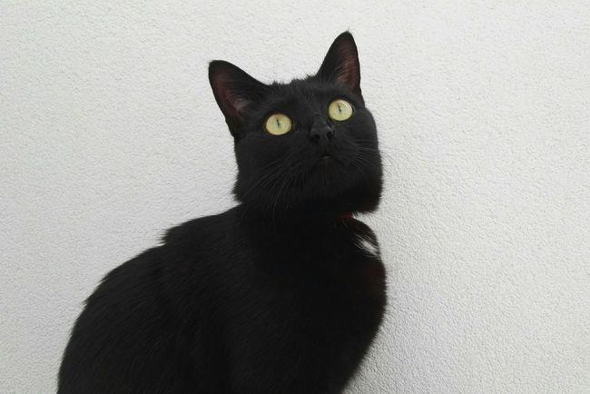 Cat Black Cat Black Cats Are Beautiful Cat♡ Cats 🐱 Cat Lovers Cats Of EyeEm Catoftheday Cat Eyes Cat Photography Cats Catlovers Black Cat Love P8 Yellow Eyed Cat Yellow Eyes My Cat