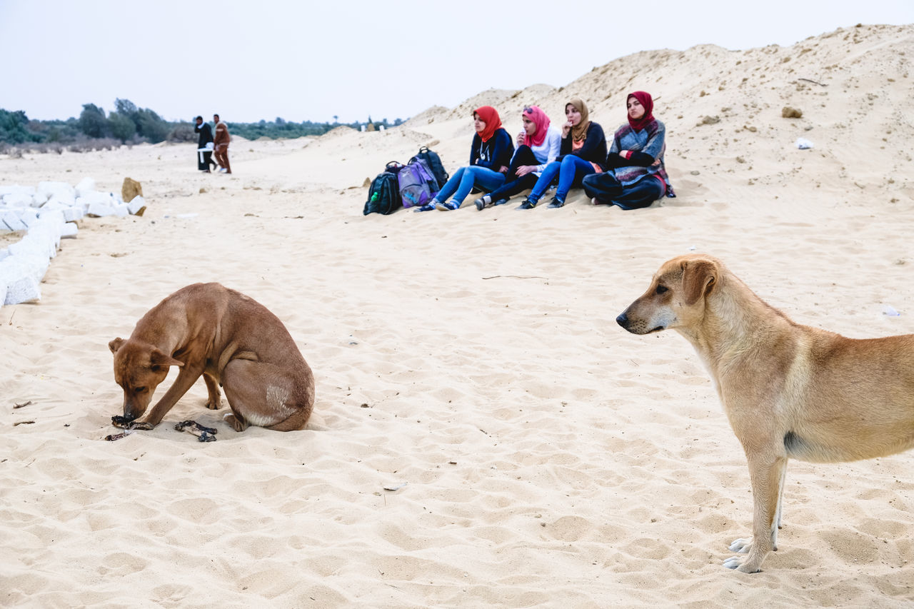 Camping Check This Out Desert Dog Egyptian Dog Exceptional Photographs EyeEm Best Shots First Eyeem Photo Girls Popular Photos Sand WADI El-Rayan, Fayoum, Egypt Camp Live For The Story BYOPaper! The Street Photographer - 2017 EyeEm Awards