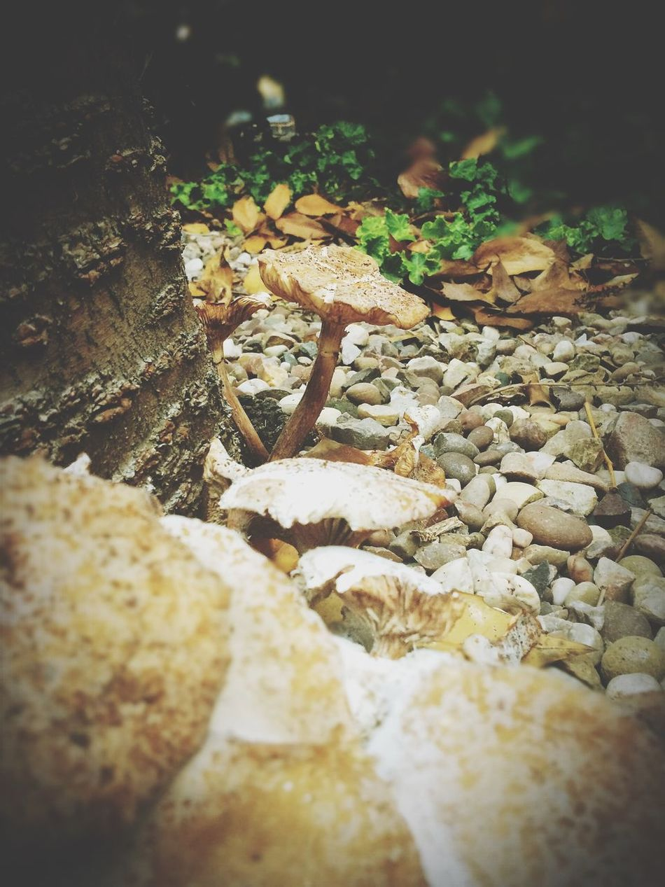 Mushroom Mushrooms EyeEm Best Shots Eye4photography  Nature EyeEm Nature Lover EyeEm Best Edits Hello World Taking Photos