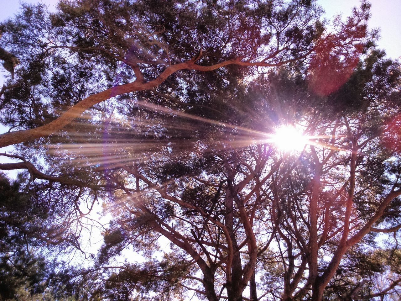 Sun Rays Sun Rays Penetrating Sun Rays Through Trees Sun Rays Behind The Tree Sun Rays Reflective Sun Glare
