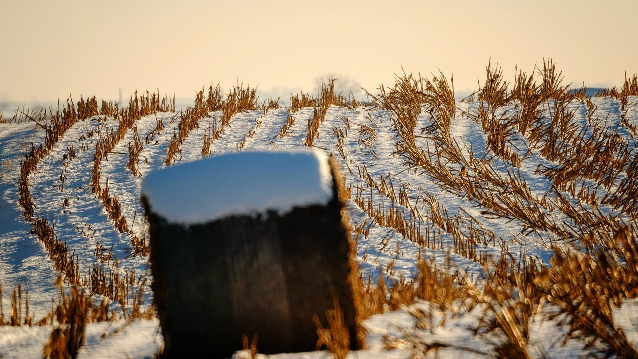 Visual Journal December 2016 Western, Nebraska (Fujifilm Xt1,Nikkor 500mm f8) edited with Google Photos. A Day In The Life Agriculture Beauty In Nature Camera Work Eye For Photography EyeEm Best Shots Farmland Frozen FUJIFILM X-T1 Great Plains Landscape Manual Focus MidWest My Neighborhood Nikkor 500mm F8 Photo Diary Rural America Scenics Small Town Stories Snow Storytelling Visual Journal Winter Winterscapes Wintertime