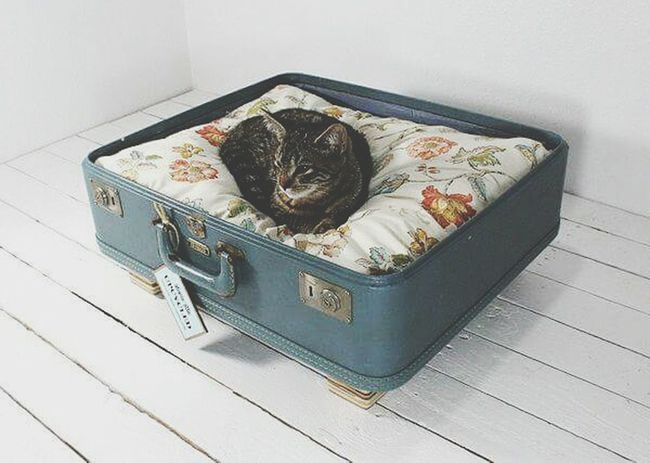 Cat Kedi Ilovecat