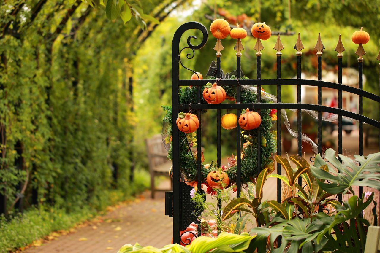 Beautiful stock photos of halloween, Day, Decoration, Focus On Foreground, Front Or Back Yard