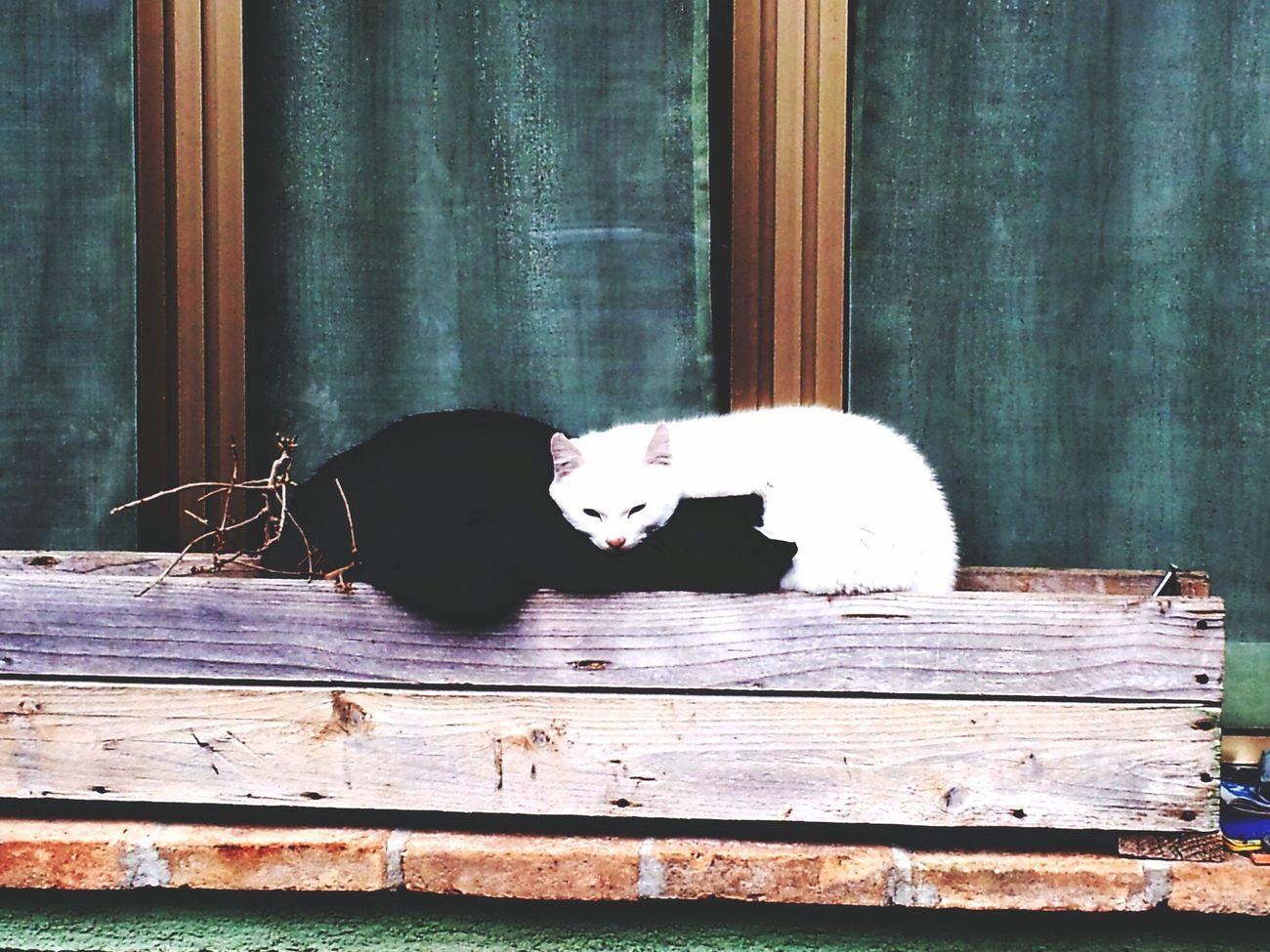 Black and White Hug Cats Cat Blackandwhite Hug