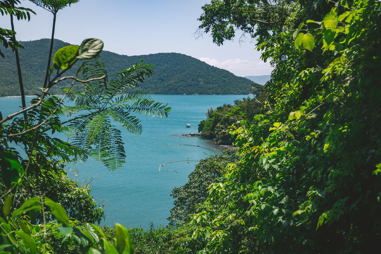 The beautiful paridise views of Ilha Grande. Banana Tree Beach Beauty In Nature Day Foreground Green Green Color Jungle Leaf Leaves Mountain Nature No People Ocean Outdoors Plant Scenics Sea Shape Sky The Great Outdoors - 2017 EyeEm Awards Tranquil Scene Tranquility Tree Water Neighborhood Map