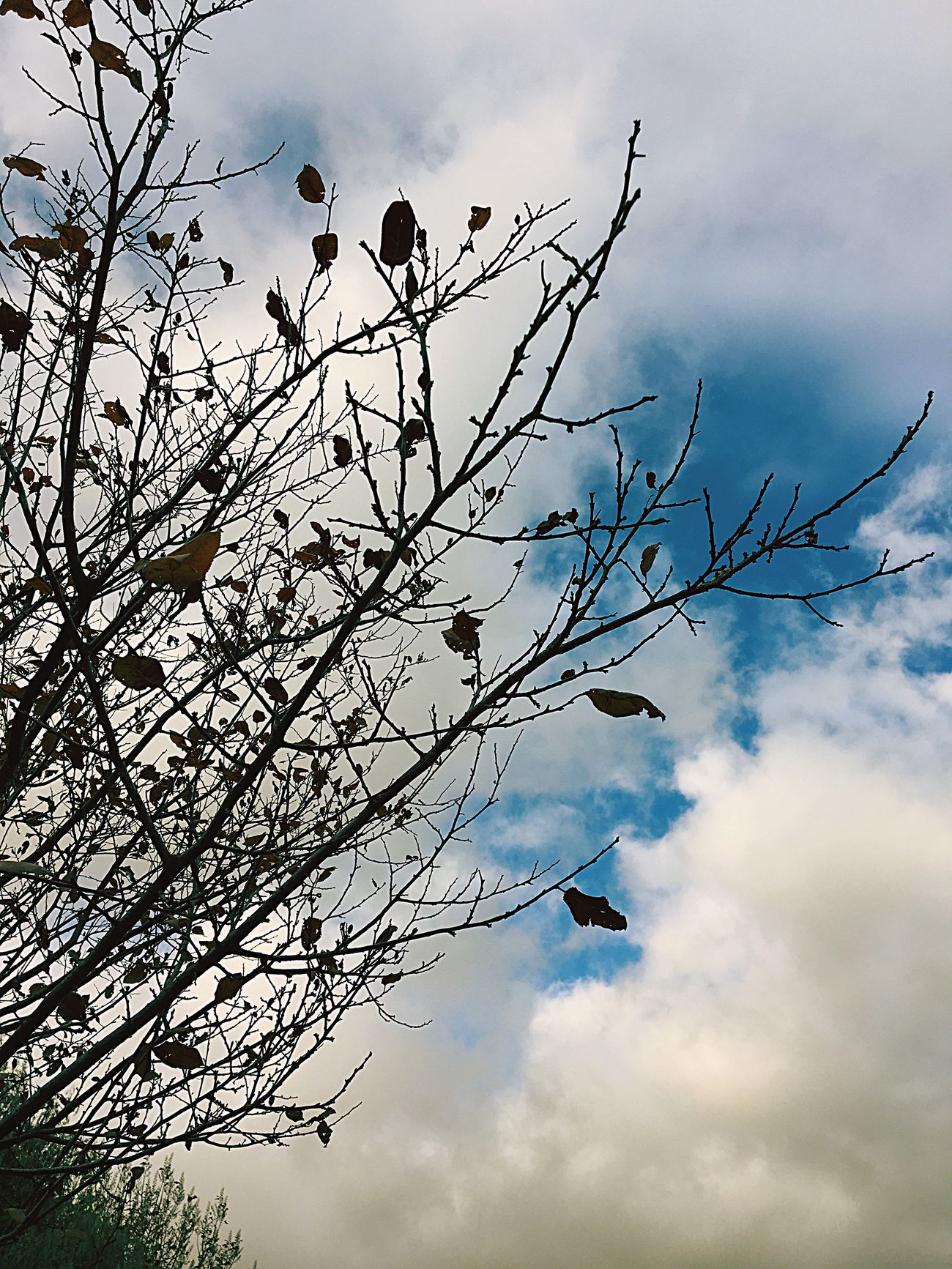 Sky Cloud - Sky Tree Nature No People Bare Tree EyeEmNewHere