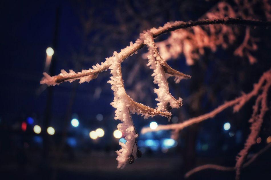 Cold Winter ❄ Snow