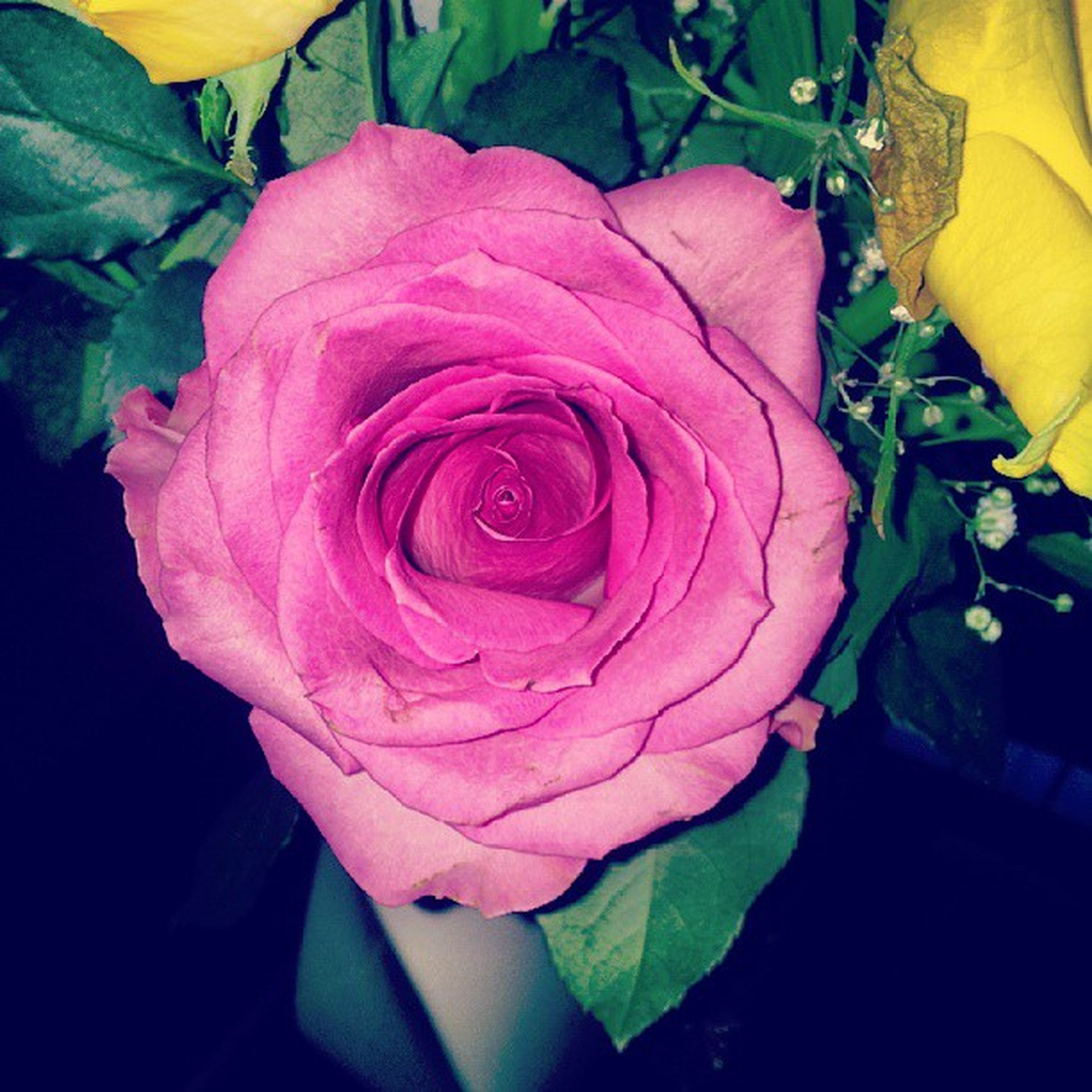 flower, petal, rose - flower, flower head, fragility, freshness, beauty in nature, growth, close-up, rose, leaf, single flower, nature, blooming, plant, single rose, high angle view, in bloom, pink color, blossom