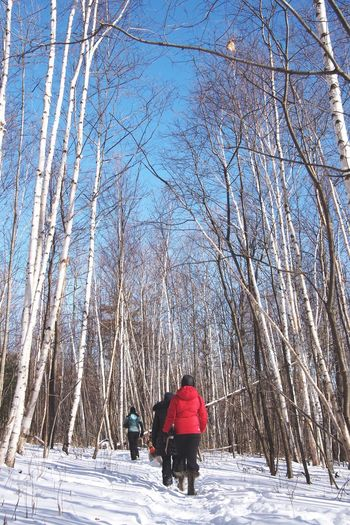 Morning walk. Open Edit Forest Hiking Adventures Hiking Trail Trees Snow Winter Vermont