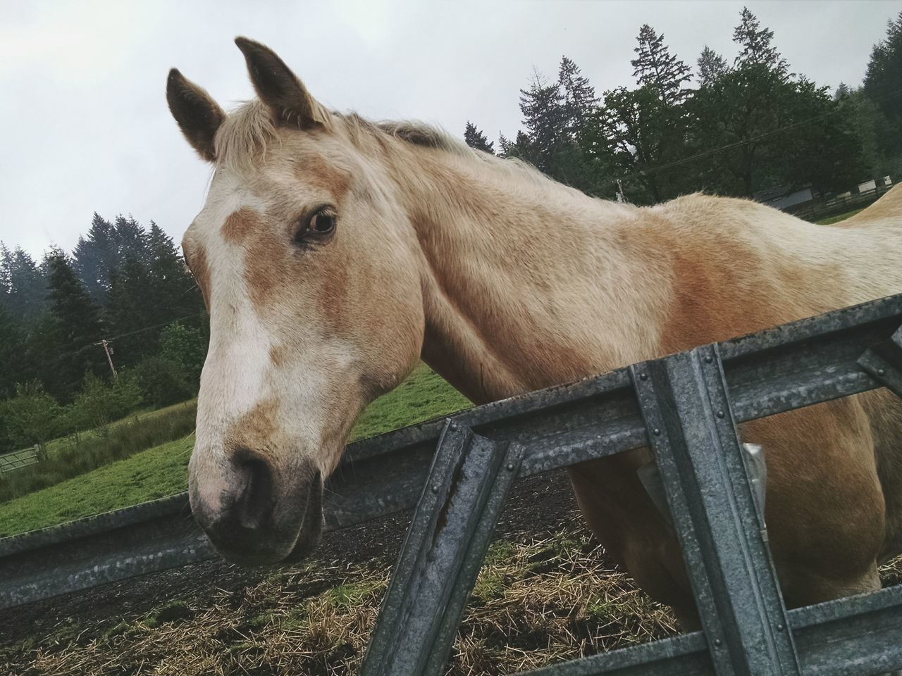 Hanging Out Horse Horse Life Enjoying Life First Eyeem Photo