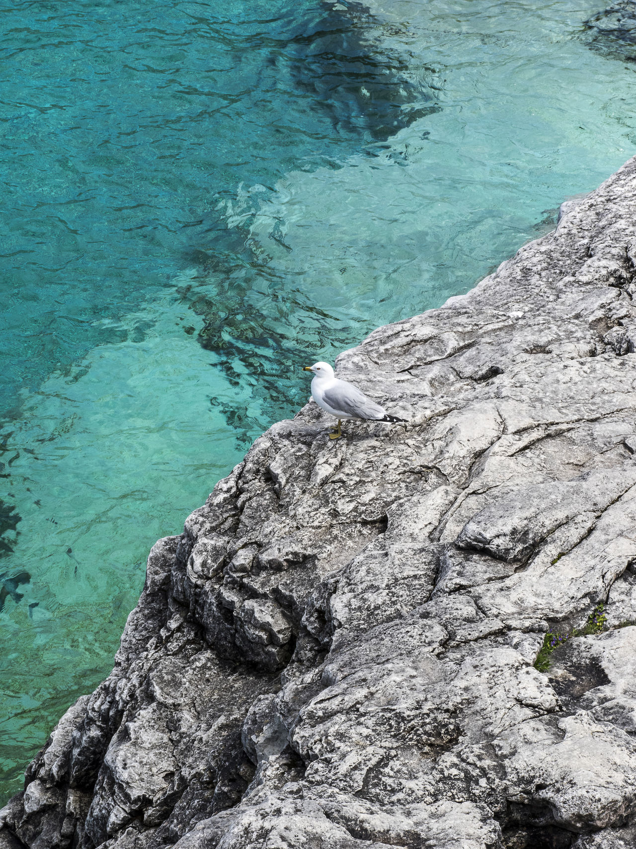 Water High Angle View Sea Day Outdoors Nature Lake Beach Coastal Shoreline Stone Clear Water_collection Great Lakes Blue Crystal Mountain Grotto Adventure Bird Seagull Wildlife Standing Geology