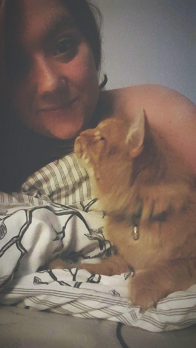 Cat Cozytime