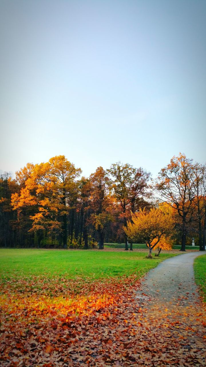 autumn, tree, change, nature, beauty in nature, orange color, tranquility, scenics, leaf, tranquil scene, clear sky, landscape, field, outdoors, day, growth, grass, no people, sky, golf course, maple
