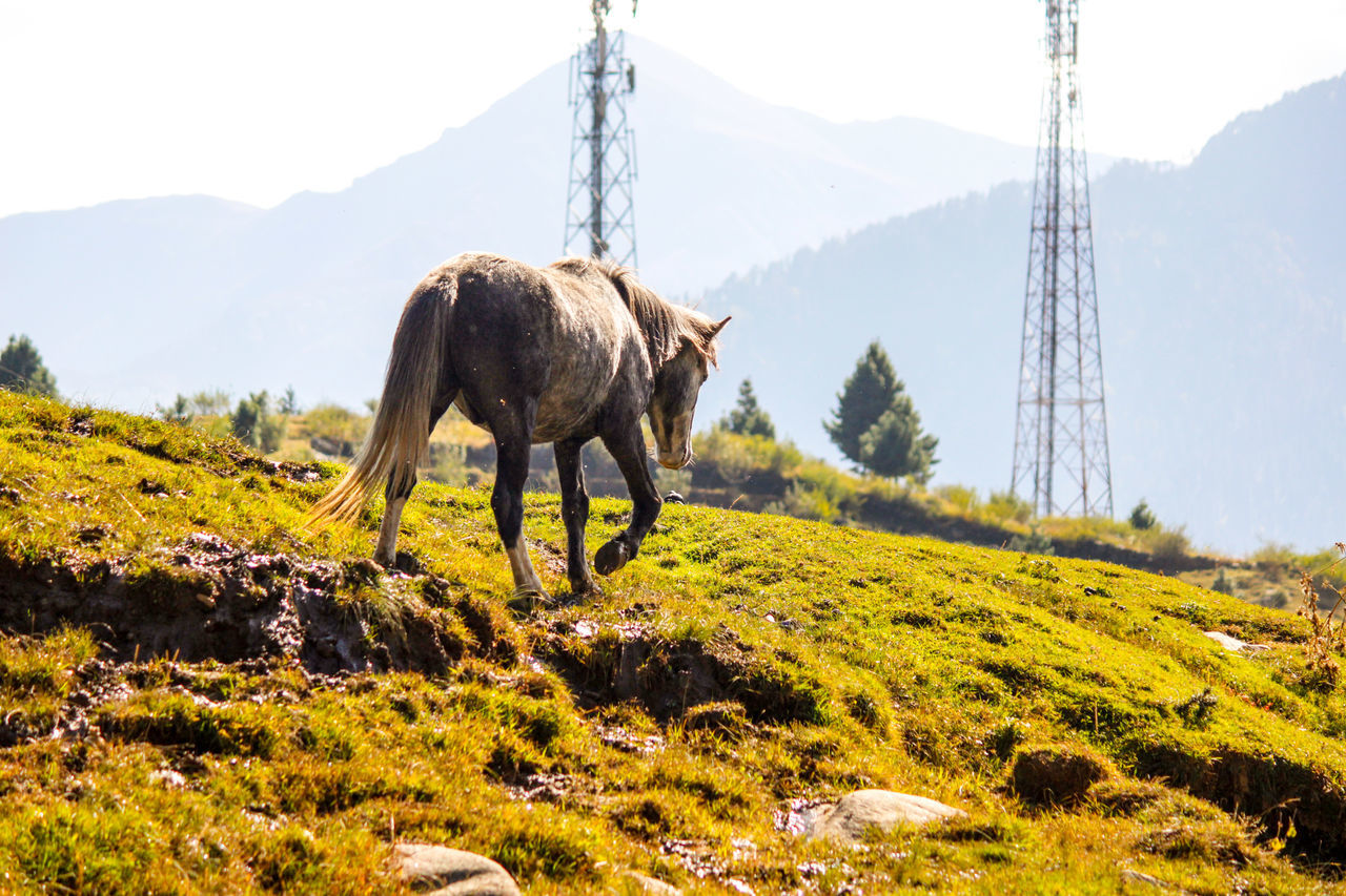 Horse Mammal Mountain Landscape Horse Photography  Horse Life Rohtang Pass,Manali Beauty In Nature No People Outdoors One Animal