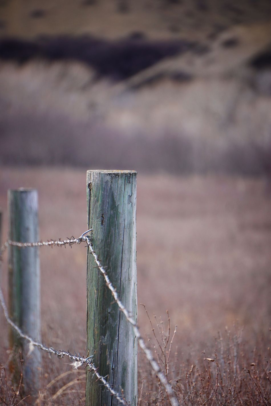 Nature Photography Nature Prairiescape Landscape_photography Alberta Canada Landscapes With WhiteWall EyeEm Best Edits EyeEm Best Shots Eyemphotography From Mypointofview Check This Out Prairie Scenes Fencepost Fence Posts With Barbed Wire