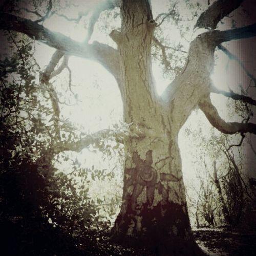 Sky And Trees Tree Junkie Tree Porn The Explorer - 2014 EyeEm Awards
