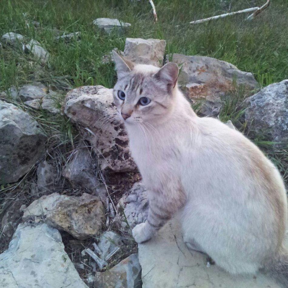 Tuiter, el gato de @rincon_talega Flk