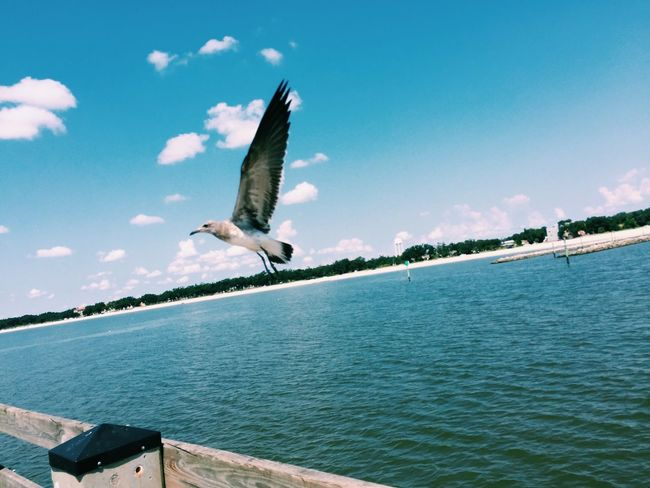 In flight... Bird Photography Birds Beach Ocean