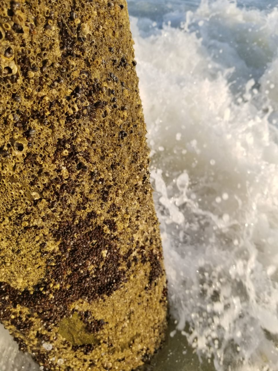 water, rock - object, no people, nature, day, outdoors, close-up, sea, beauty in nature