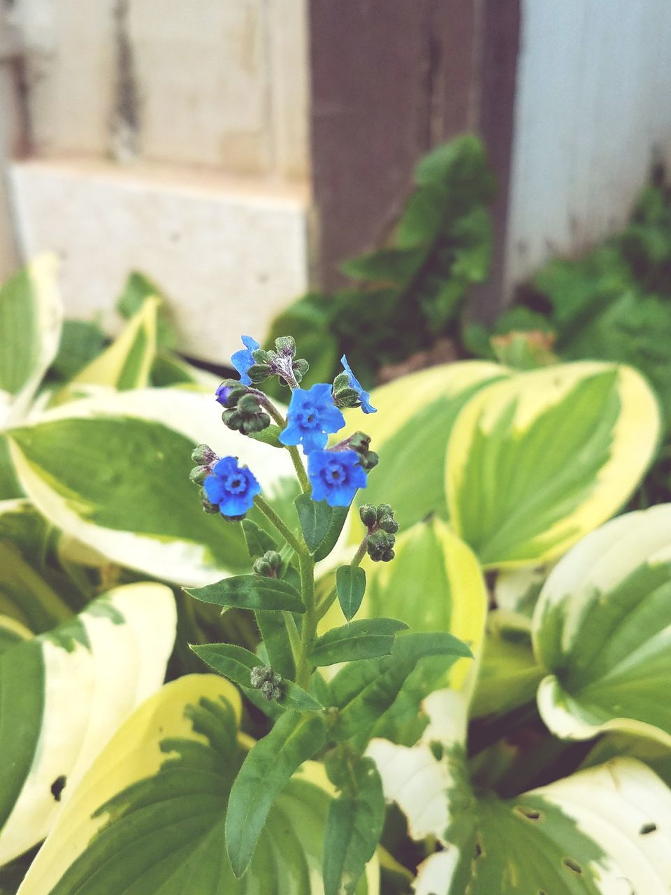 flower, petal, fragility, growth, day, freshness, leaf, beauty in nature, nature, outdoors, green color, plant, no people, flower head, close-up