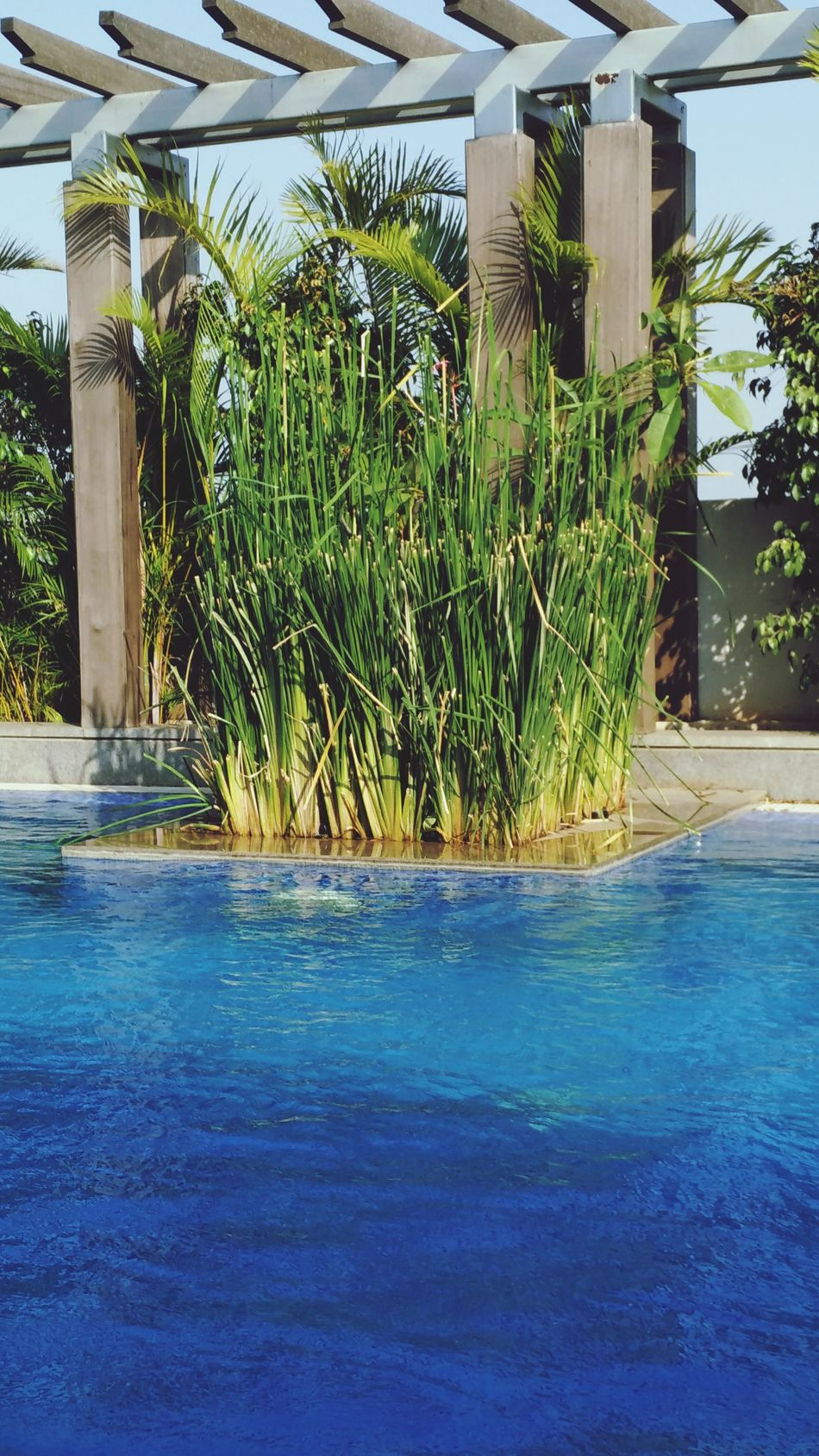 Swimming Peace And Quiet Poolside Pool Blue Water Green Grass Plants 🌱 Relaxing Summertime