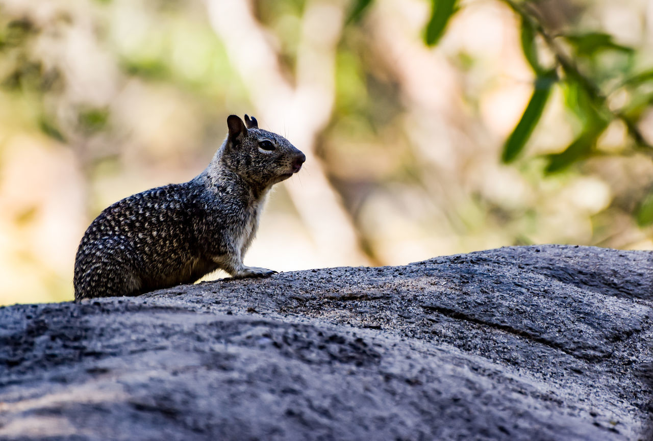Animal Themes Animal Wildlife Animals In The Wild Chipmunk Critter Day Mammal Nature No People One Animal Outdoors Rock - Object Woodland Critters