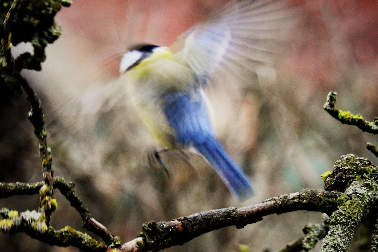 Animals In The Wild Animal Wildlife Bird Flying Bird Animal Themes One Animal Nature Day Outdoors No People Beauty In Nature Close-up Fly Movement Photography Move