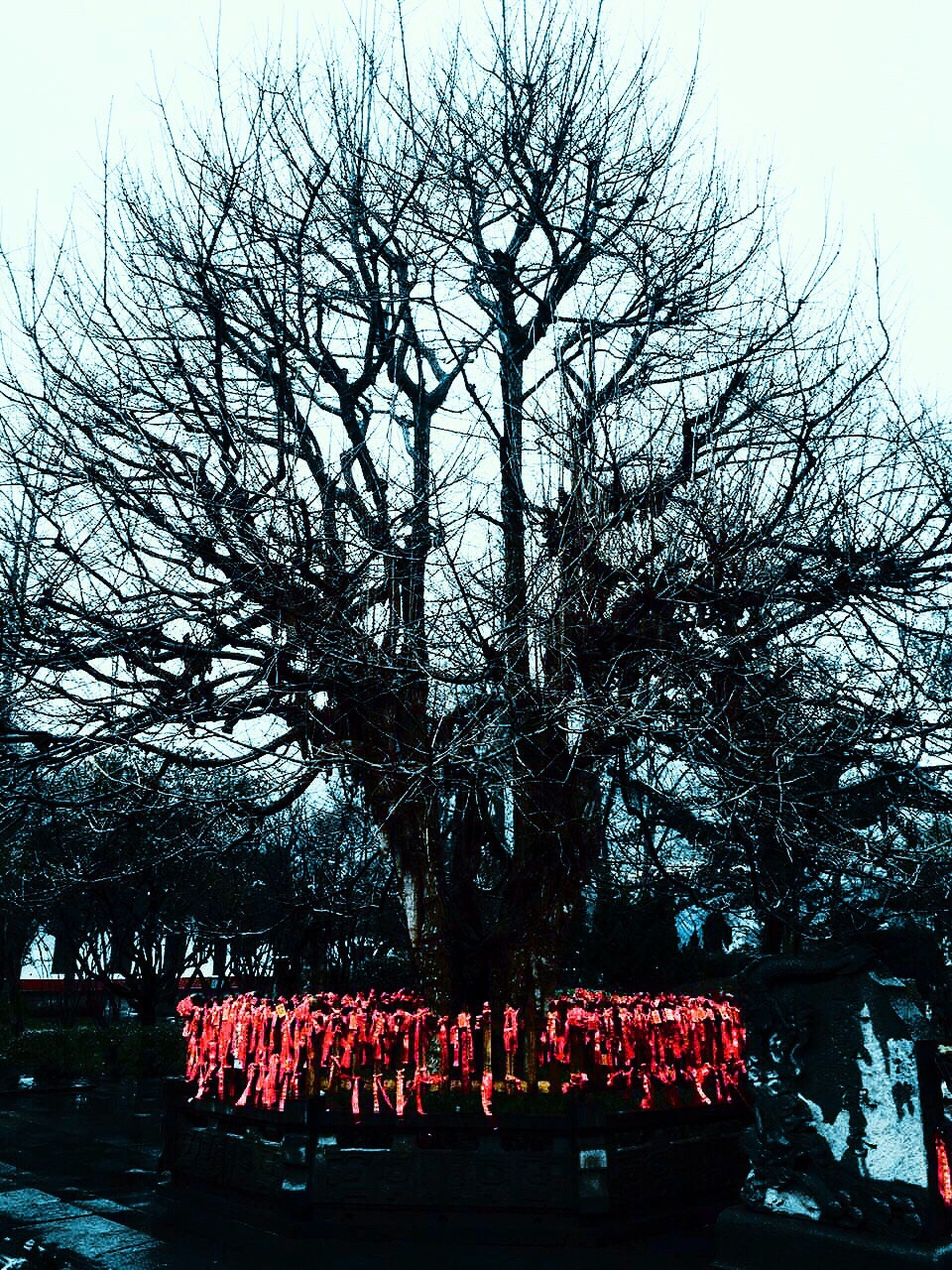 tree, bare tree, red, branch, low angle view, sky, clear sky, day, nature, outdoors, growth, built structure, no people, architecture, building exterior, text, tree trunk, western script, tranquility, park - man made space