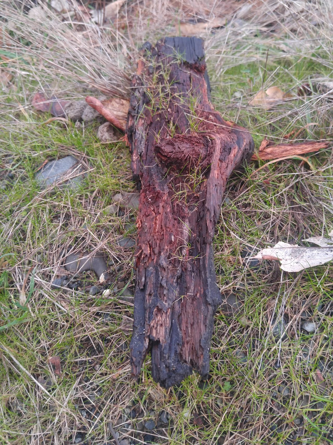 Unfiltered No People Nature Day Outdoors Treethugger Winter Enumclaw Tree Beauty In Nature Freshness