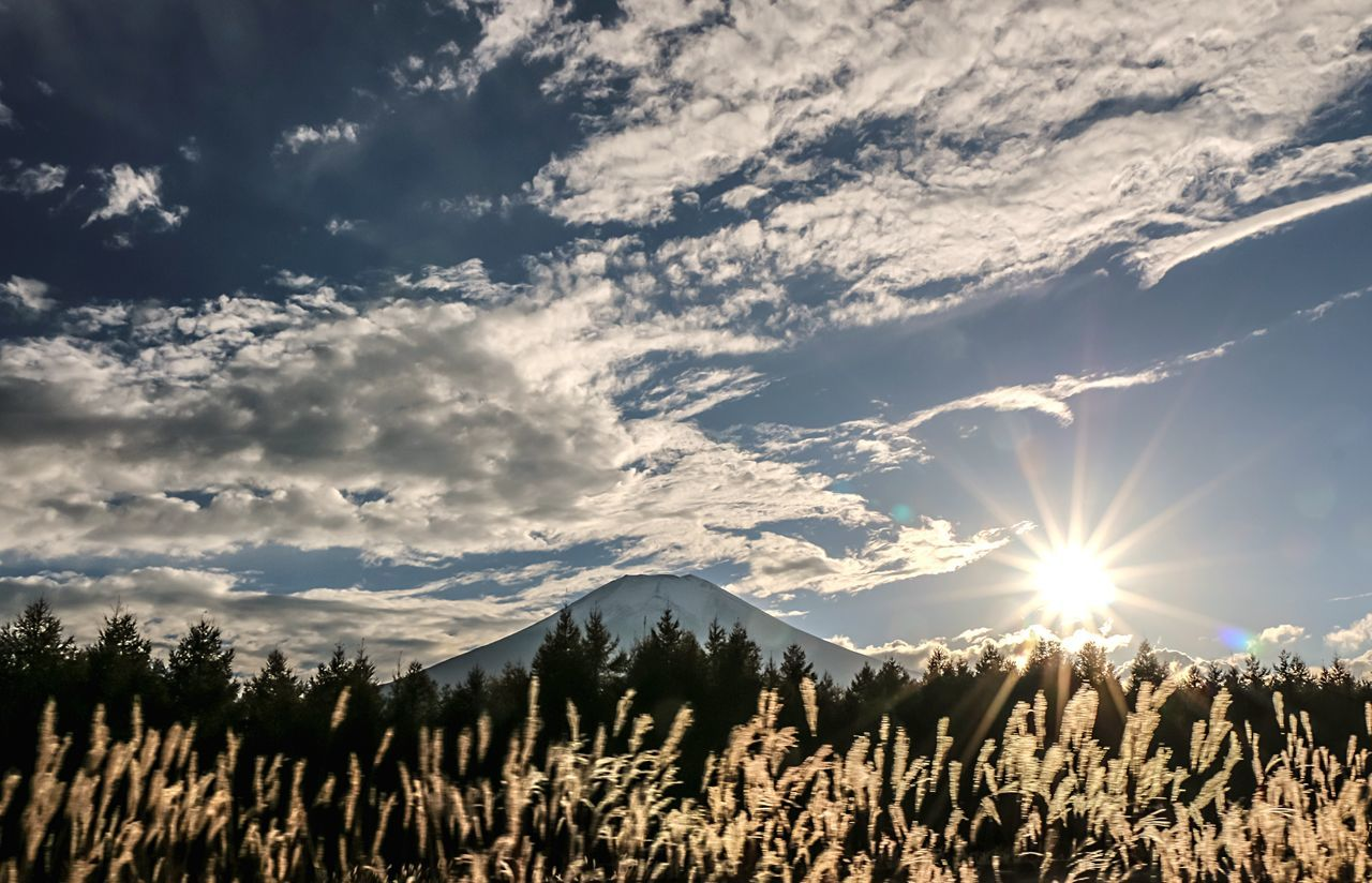 A Series Of Fuji Mountain's Picture -18 Fuji Mountain Autumn Colors Beautiful Nature Bulrushes In Backlighting Eye Em Nature Lover EyeEm Best Edits Mt.Fuji Natural Beauty Backlighting