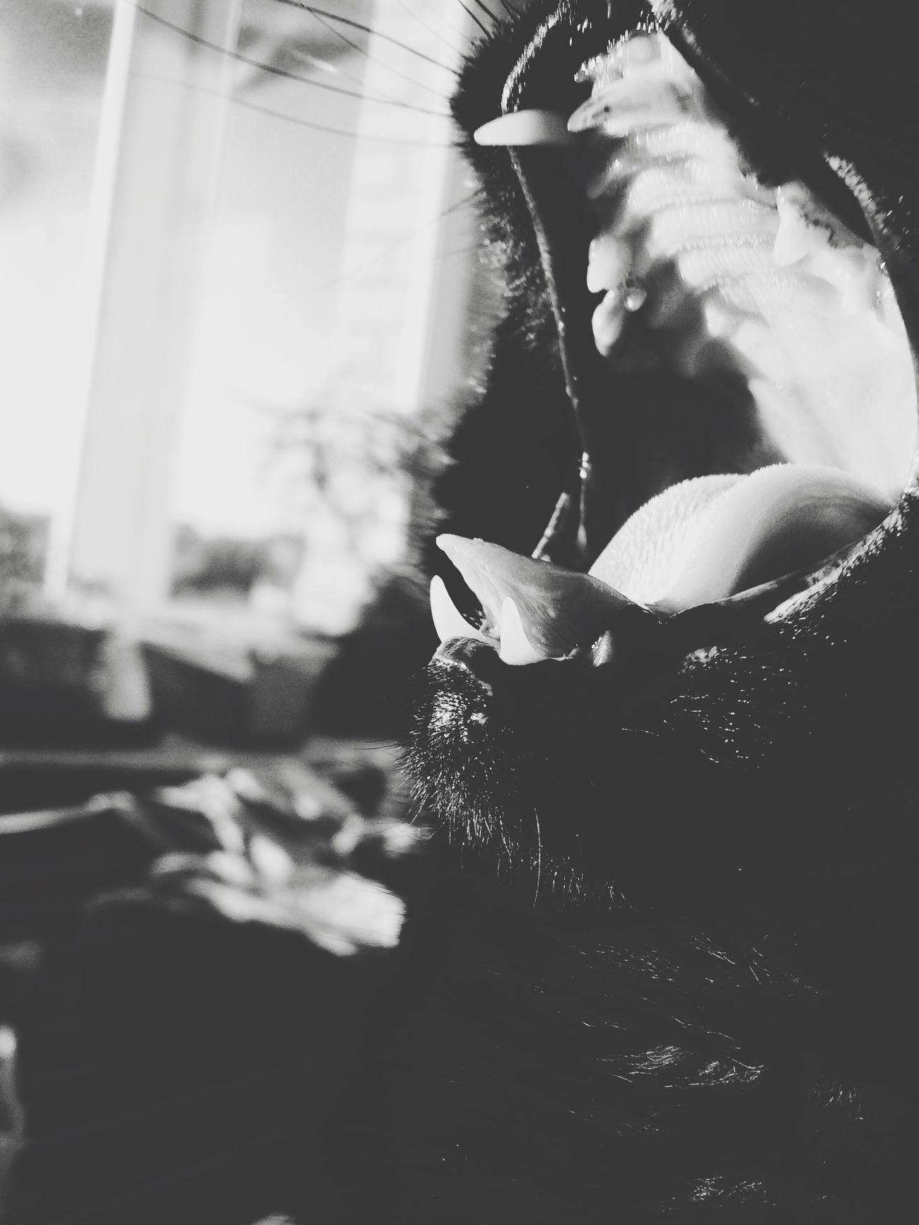 Indoors  Lifestyles Day Cat Black My Love Cat Cat Lovers 🎈👻