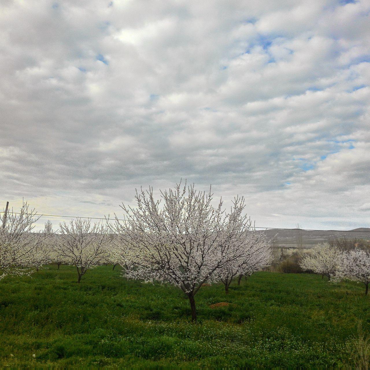 The Great Outdoors With Adobe Malatya Apricot Tree No Filter Mylife ♡ Amateurphotographer  Outdoors Turkey Olcay Özfırat