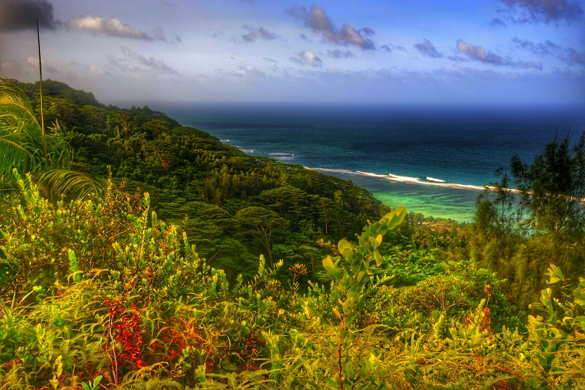 More like garden of Eden Trees Tropical View From Above Seychelles Islandlife Beautiful Naturelovers Check This Out