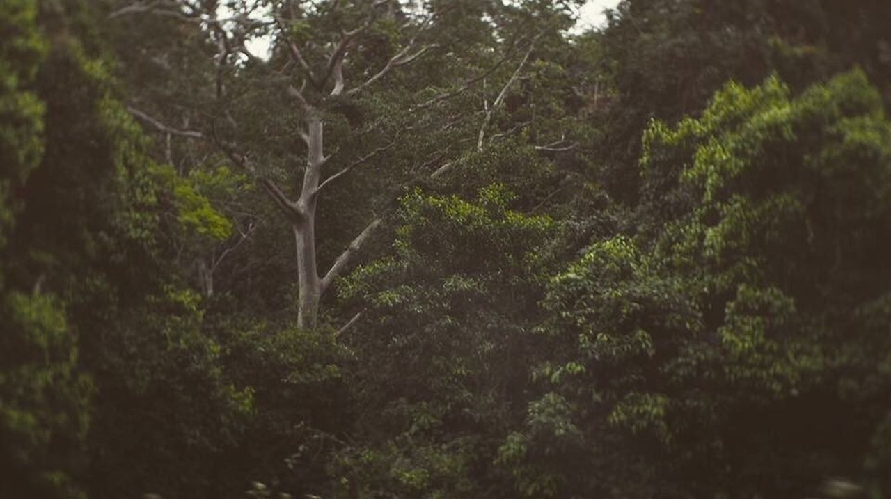 tree, forest, nature, no people, outdoors, day, tranquility, beauty in nature, close-up