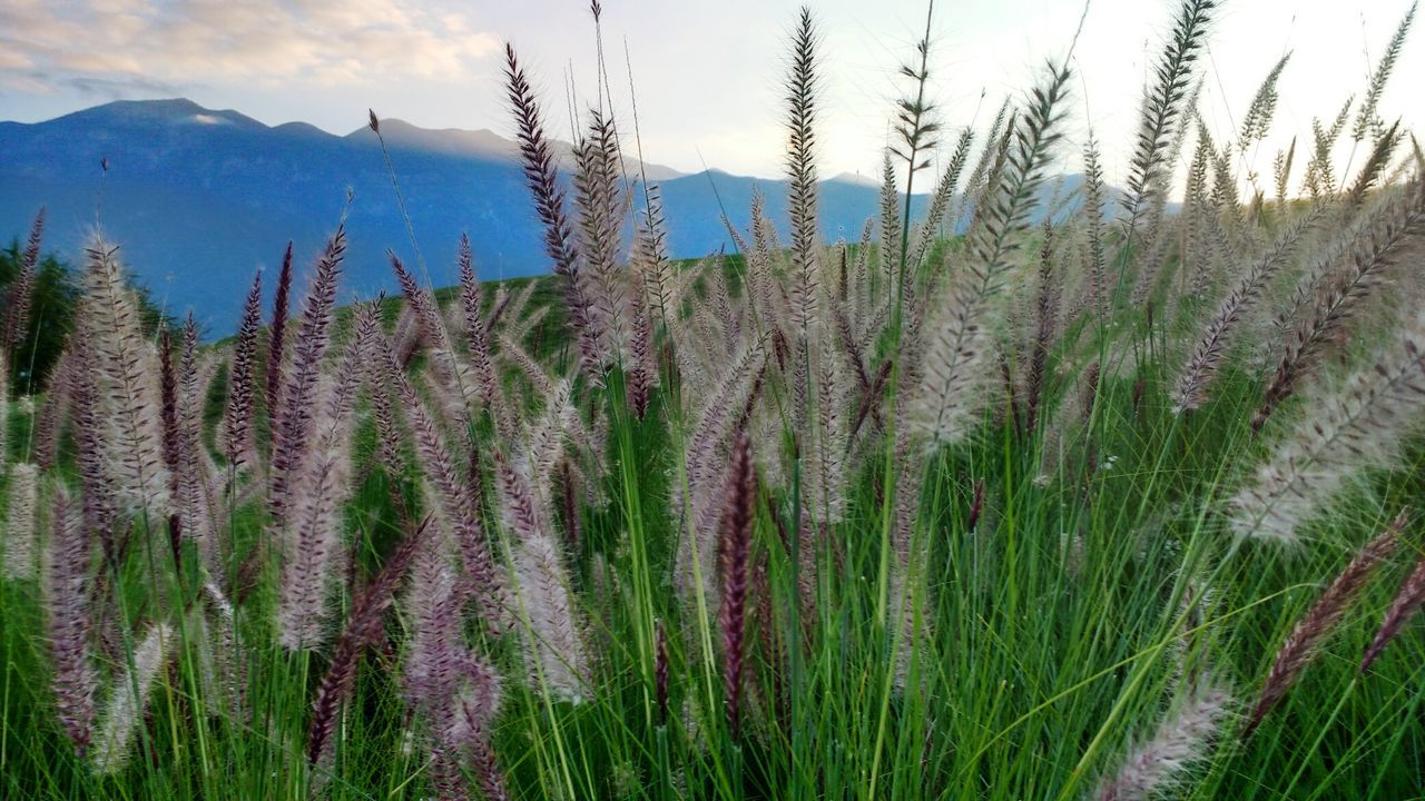 Nature Sunset Sky No People Outdoors Landscape Mountain Carreteranacional Monterrey Mty Wheat Field Tranquility Tranquility Scene Tranquilidad