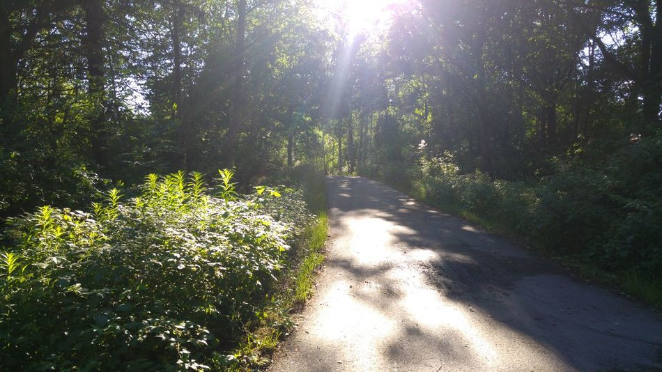 Nature Green Woods Trees Sunnyday Sweden Angered Hjällbo Taking Photos