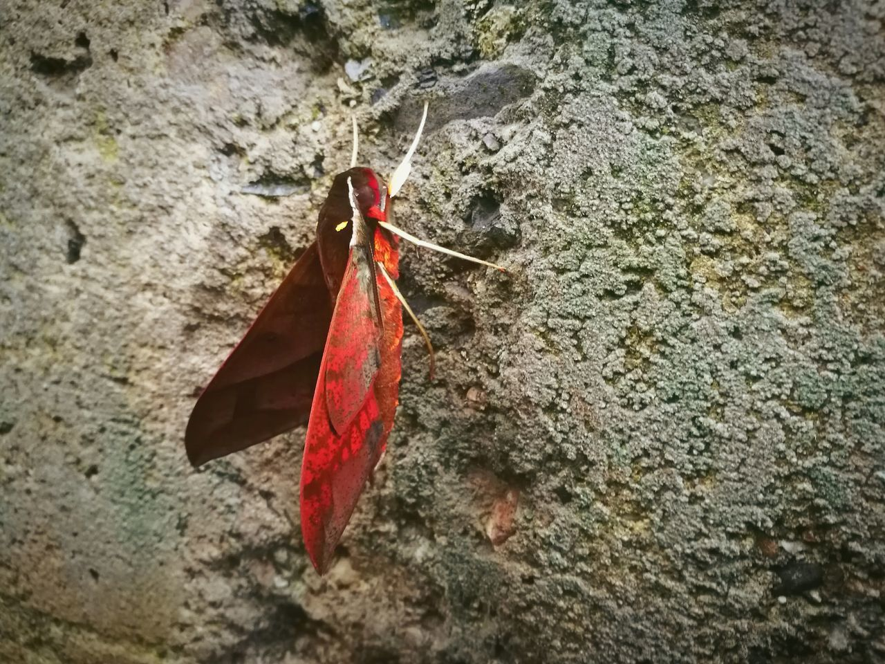 leaf, red, autumn, no people, hanging, day, close-up, outdoors, nature