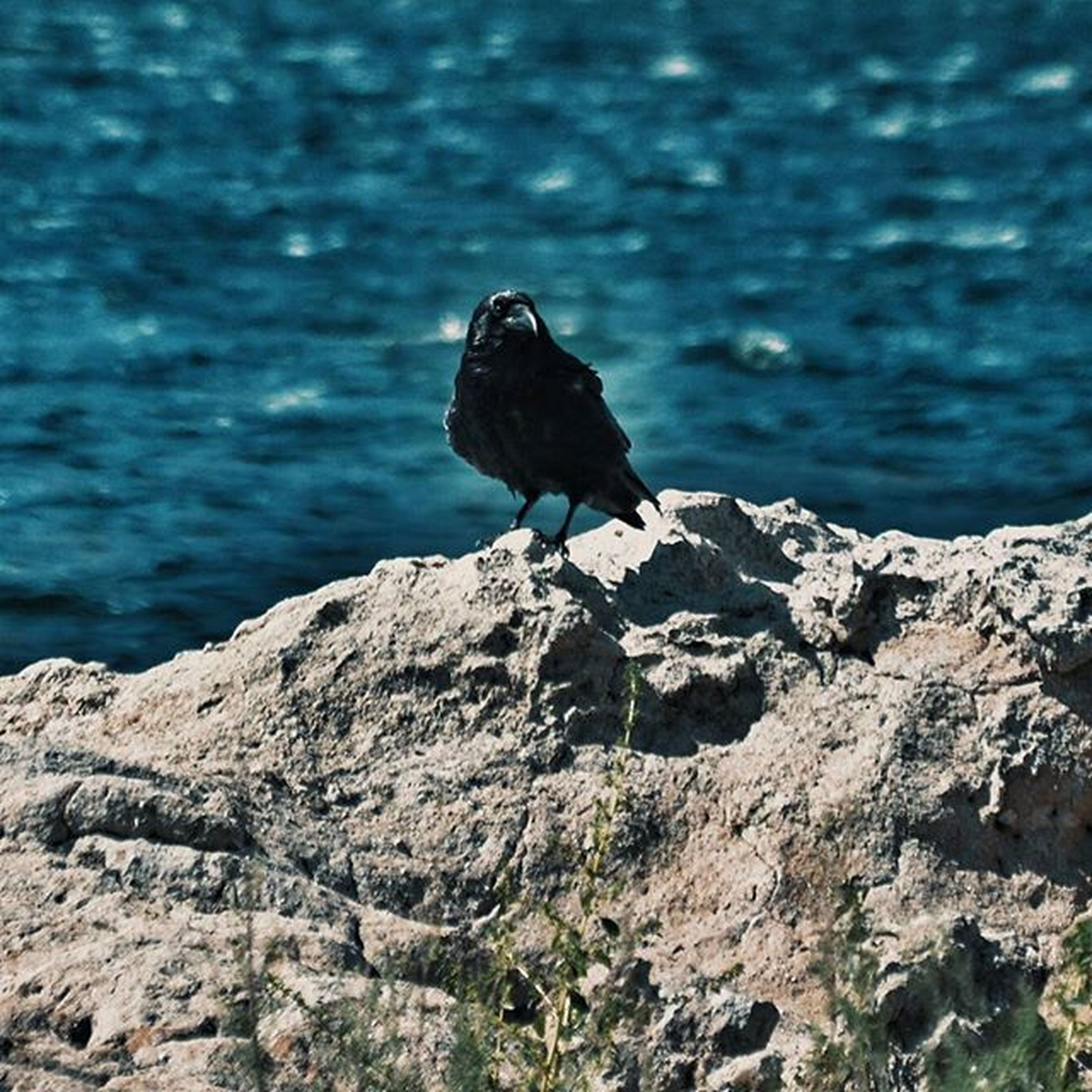 one animal, animal themes, animals in the wild, rock - object, bird, wildlife, focus on foreground, rock, nature, water, full length, perching, rock formation, beauty in nature, sea, tranquility, day, outdoors, side view, blue