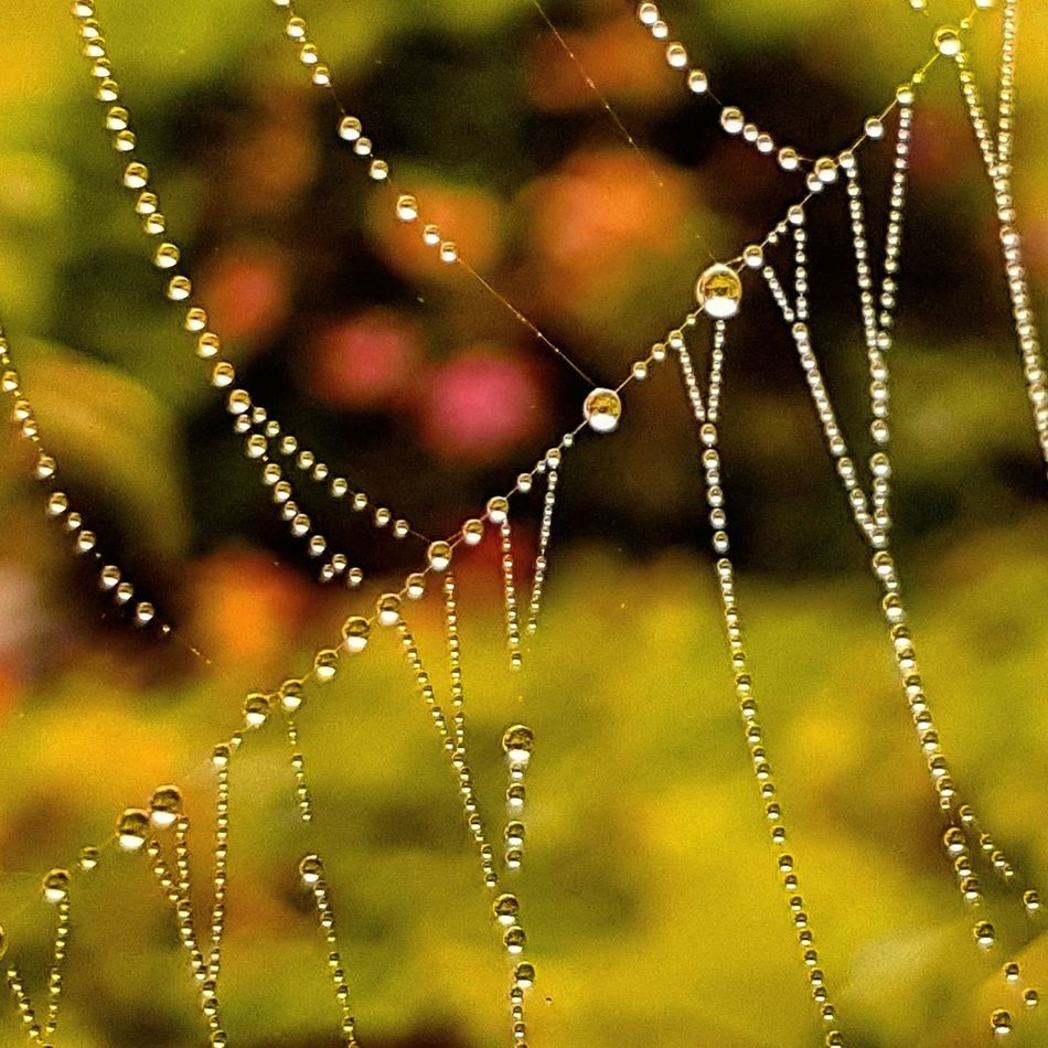 Spider Web Fragility Nature No People Beauty In Nature Close-up Focus On Foreground Outdoors Trapped Web Day Spider Water Animal Themes Spider Nature_collection Eyenaturelover Spider Silk Spinnennetz Spinnweben Tautropfen Nature_collection EyeEmNewHere Naturephotography