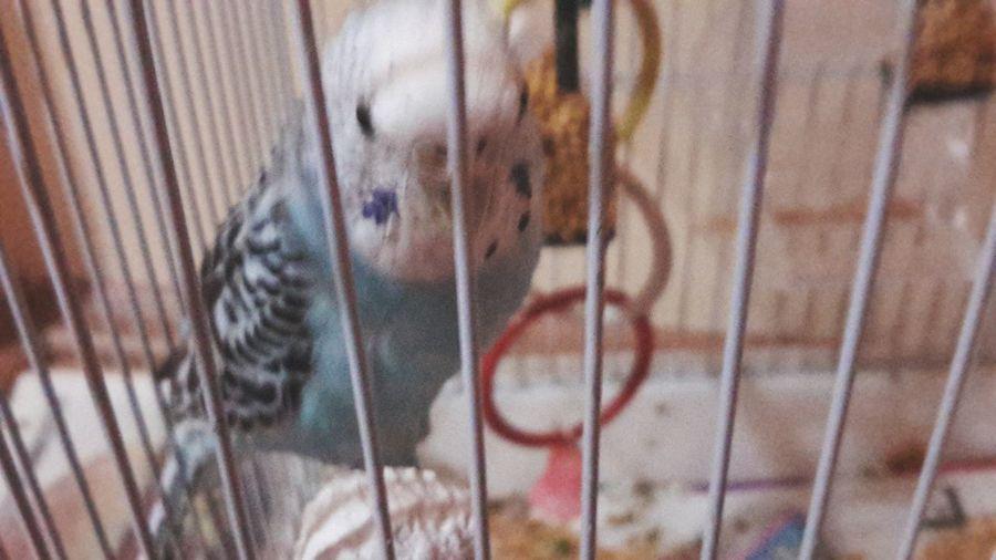 I like bird Birds Animals Loveee ♥