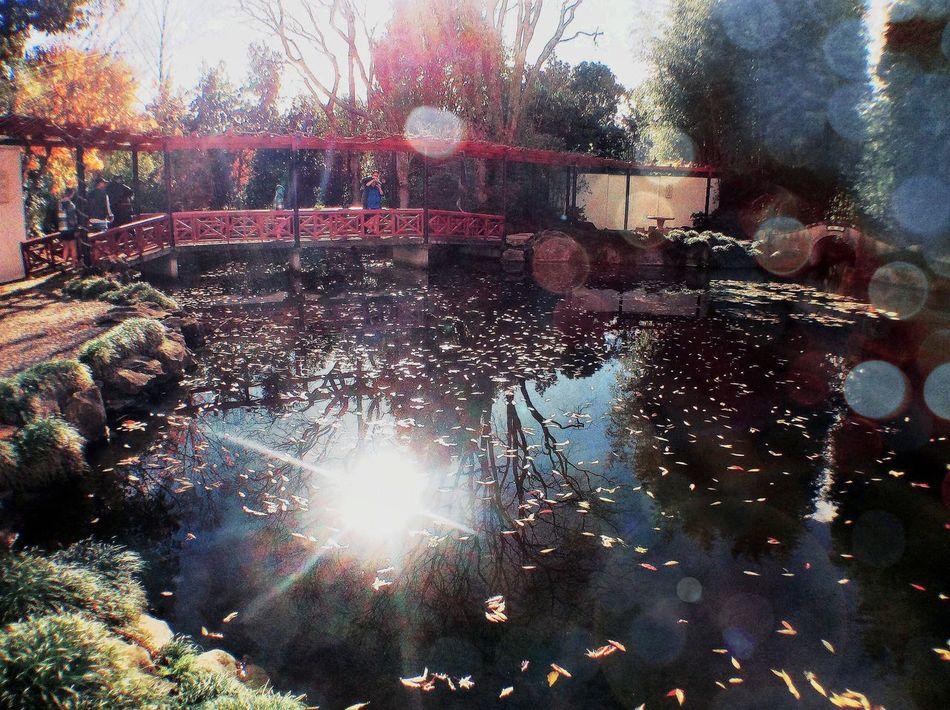 Hamilton The Global EyeEm Adventure Waikato Hamilton Gardens Hamiltongardens EEA3_CambridgeNZ EEA3 Pond Chinese Garden Ipadphotography