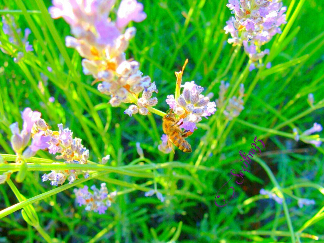Miss kokulu çiçekler... Summer Nature Green Enjoying Nature Nature Makes Me Smile Nature_collection EyeEm Nature Lover
