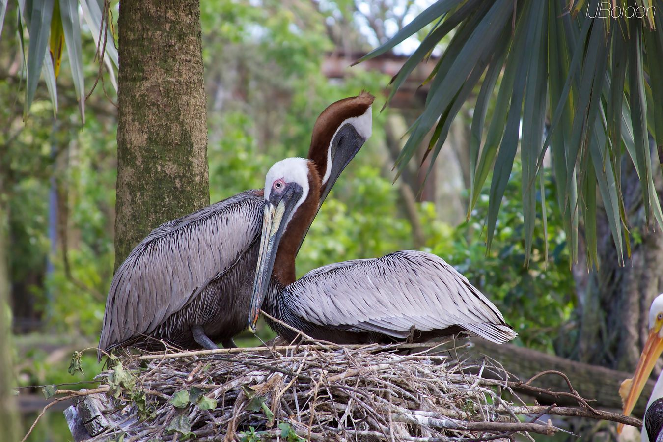Love Birds Flamingo Gardens Florida Life The Moment - 2015 EyeEm Awards