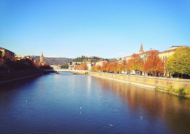 Verona Veneto Italy Adige River Adige Ponte Delle Navi Ponte Navi Birds Autumn Autumn Colors City Architecture Building Exterior Built Structure Water Clear Sky River City Outdoors Travel Destinations Tree Nature Sky Day No People Beauty In Nature