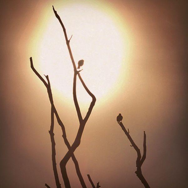 Fierry Sunset Blackcrow Gagans_photography Instachandigarh Instatext Instatricity Instachandigarh