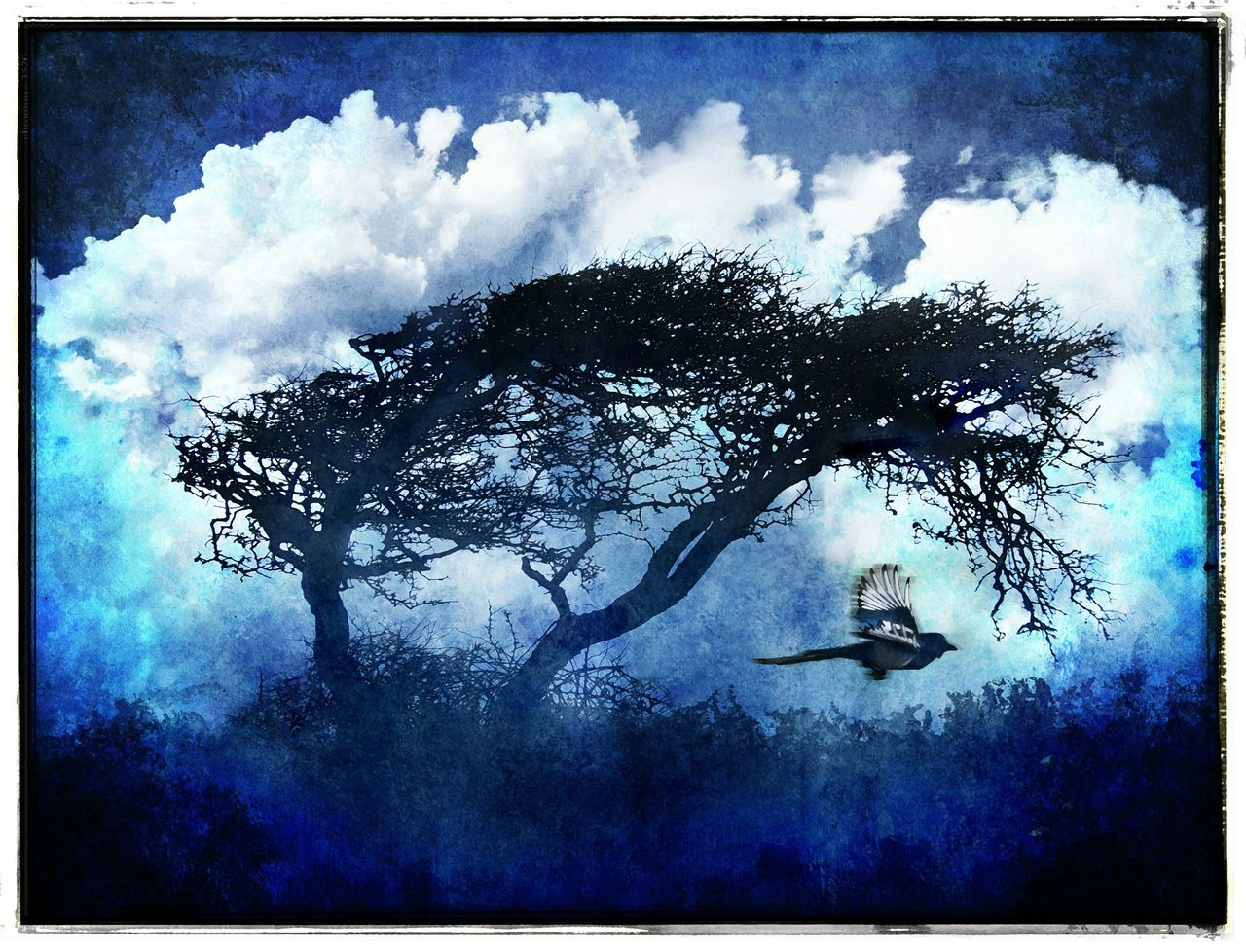 Blue Trees Blue Trees Blue Sky Windswept Windswept Trees Winter Trees Blue MontageLiberated Trees Shades Of Blue Silhouette White Clouds Blue Sky White Clouds Winter Magpie Tree Silhouette Tree Art Tree And Bird