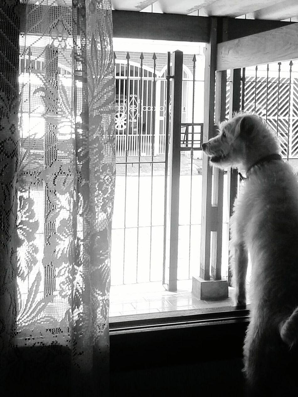 My girl ♡ Mydog Gaia Maria Dogslife GaiaMaria Doglover Lovely Dog Dog Lover Doglovers Dogs Of EyeEm Dog Love