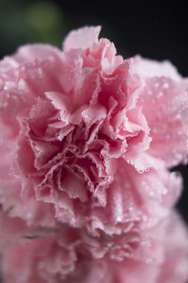 Pink Un-edited Flower Flowers Flower EyeEmBestShots-Reflections Colourful